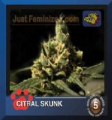 Bulldog citral skunk feminized best cannabis seeds sale online